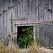 Skagit County Barn by bluebrightly