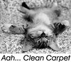 CRBR-carpet-cleaning-chico-sacramento-yuba_city-reno-redding by Cleanritebuildrite