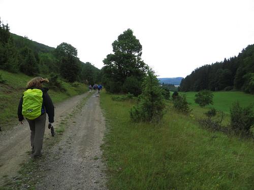 20150727 02 271 Romea Wald Weg Baum Pilger