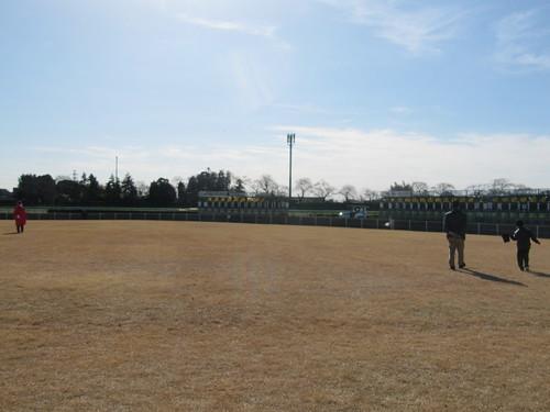 中山競馬場の内馬場の芝生