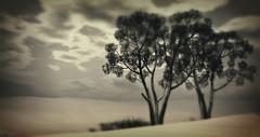 Devin - III - A blogpost