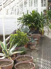 flowerpot, garden, plant, houseplant,