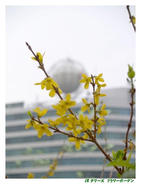Photo:JR Flower garden. 060312 #01 By osanpo
