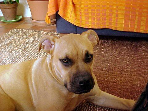 Great Dane Eats Small Dog On Oprah