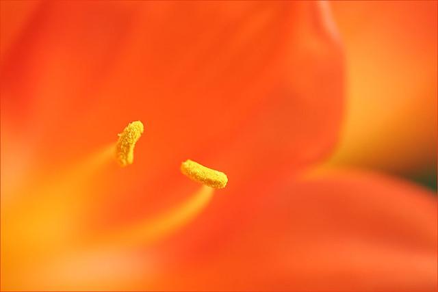 soaked in orange