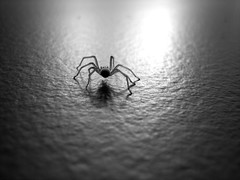 Spider in the Bathroom!