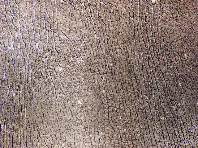 Rhino Skin | Flickr - Photo Sharing!