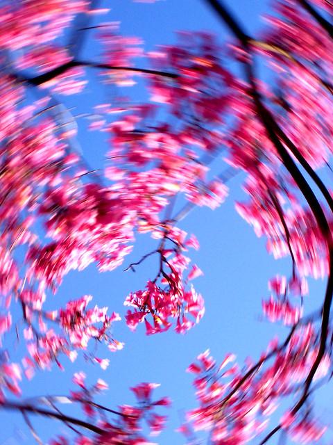 flower tree toss 063