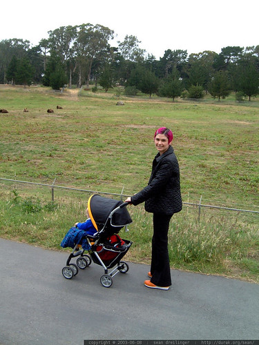 rachel pushing nick past the bison in golden gate park   dscf5248