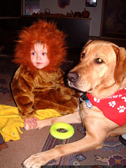nick the scary lion and jed the service dog   dscf6977