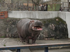 Asahiyama zoo, Asahikawa, Japan