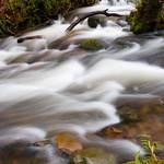 Exmoor-Horner Woods (1)