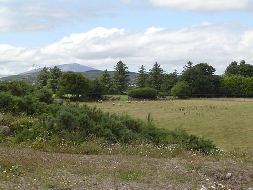 ireland geotagged 2006 mayo comayo foxford boherhallagh geo:lat=54006356 geo:lon=9085693
