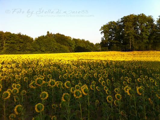 © foto by Stella.di.mare83 - http://blog.libero.it/ibattitidelcuore
