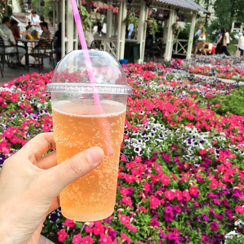 Mors (Russian lingonberry juice) in Moscow, Russia モスクワ、コケモモの炭酸ジュース『モルス』