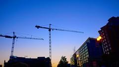 DC Dance of the Cranes 59106