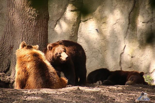 Tierpark Hagenbeck 26.07.2015 91