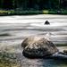 """Payette River Rapids by Scott Stringham """"Rustling Leaf Design"""""""
