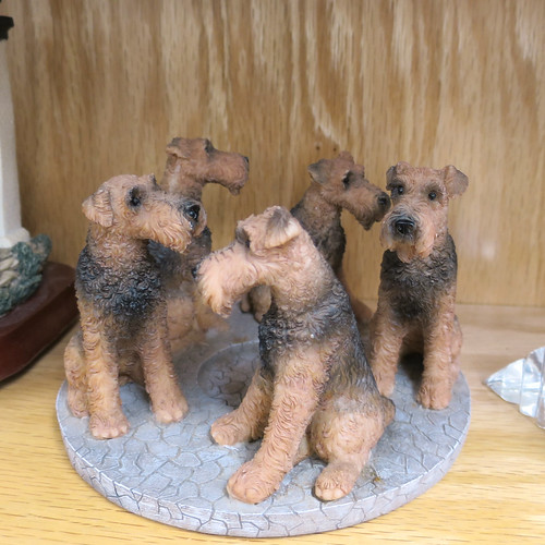 ring of terriers