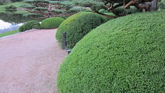 shrub, garden, soil, grass, tree, plant, yard, green, landscaping, hedge, groundcover,