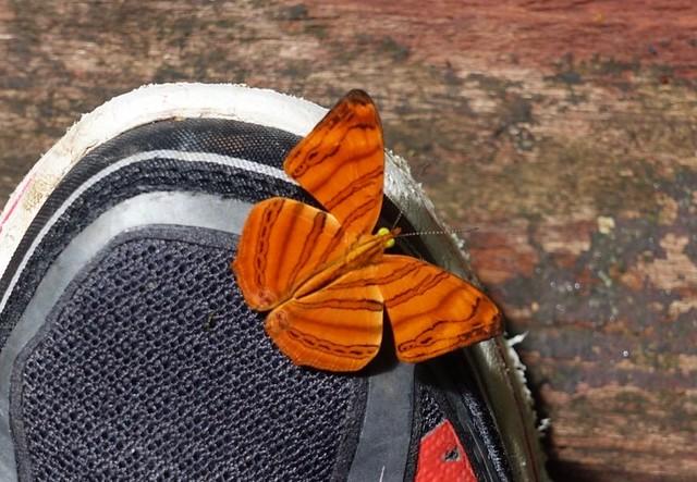Butterfly enjoying my shoe