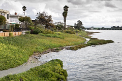 King Tide Floods Trail Near Homes in Alameda