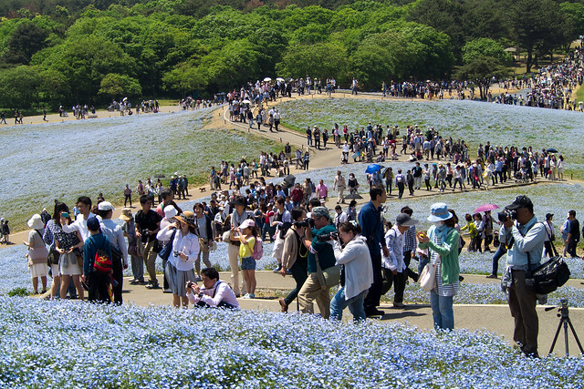 Hitachi Seaside Park 8