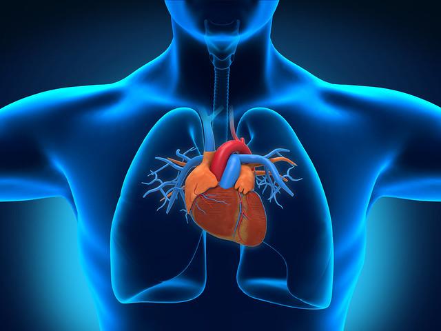 Human Heart Lessons Tes Teach