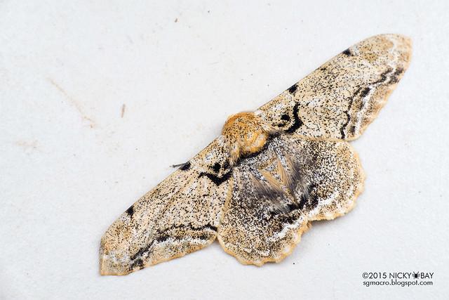 Moth - DSC_4461
