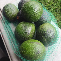 Picked up a pile of Reed Avocados in Ramona.... They are tender and creamy, mmmm! #vegan #vegansofig #veganfoodporn #avocado #caavocado #ramonaca #reedavocado #whatveganseat #p2tv #bestofvegan #youstayhungrysd #sandiego #sandiegovegan #sdfoodie