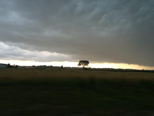 Storm clouds and tree