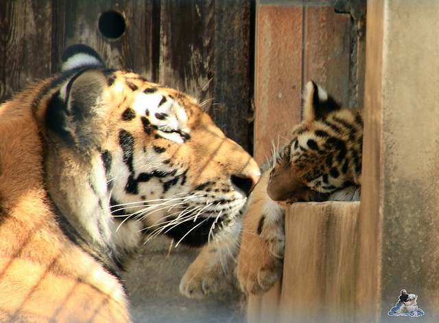 Tierpark Berlin 18.07.2015 0100