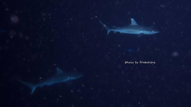 サメがウロウロ~