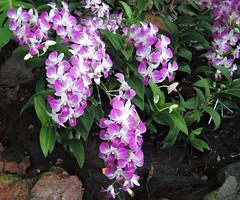 digitalis(0.0), annual plant(1.0), flower(1.0), plant(1.0), lilac(1.0), flora(1.0), snapdragon(1.0),