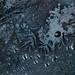 night dew by Lexiv V