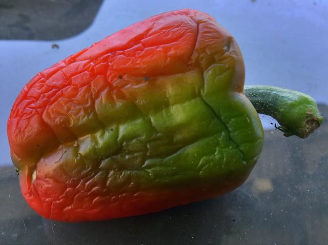 Pepper Pro HDR X