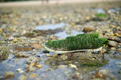 Shoe covered in seaweed
