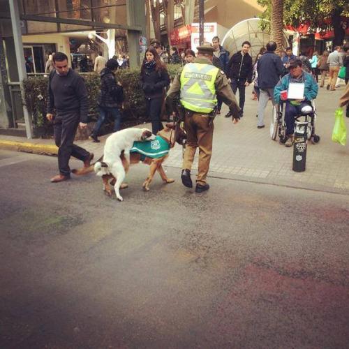 foto graciosa de perro policia siendo cacheado