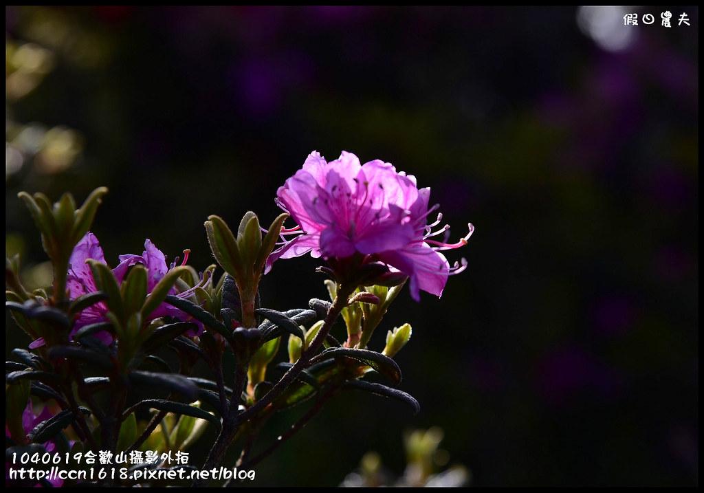 1040619合歡山攝影外拍DSC_1255