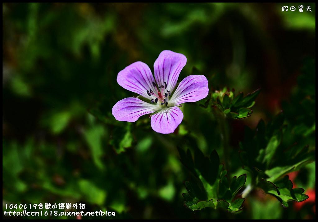 1040619合歡山攝影外拍DSC_1640