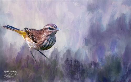 Image of a Flycatcher bird on one of my textures