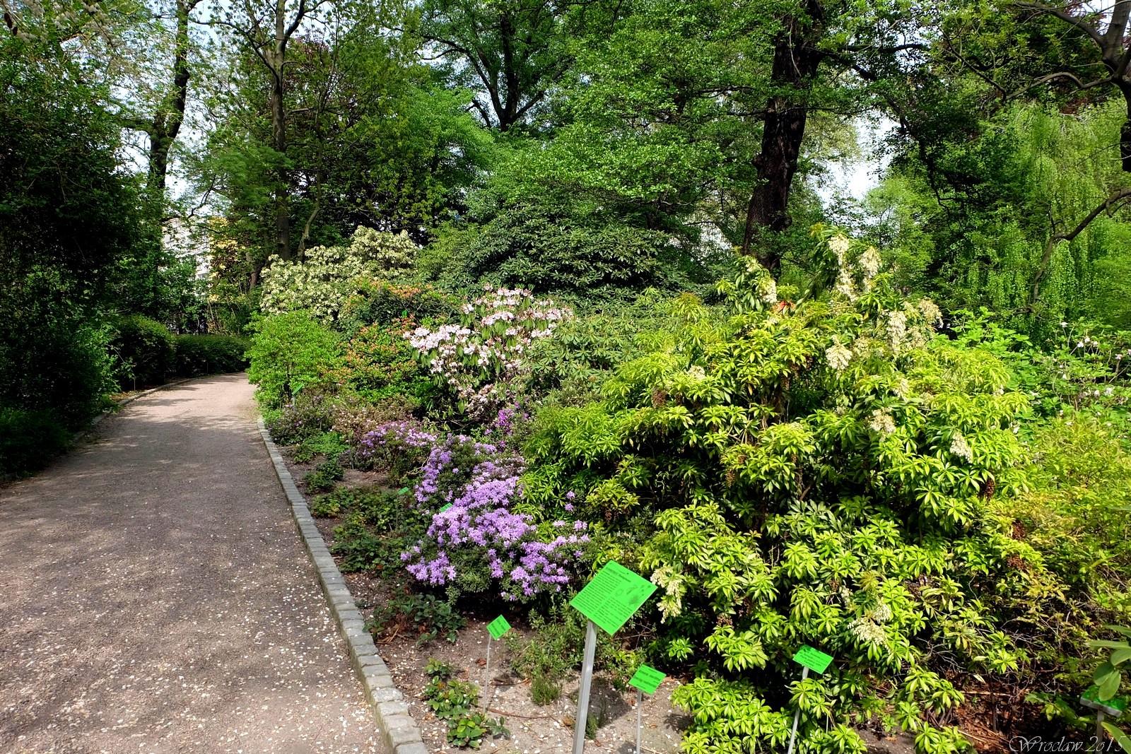 Ogród Botaniczny Uniwersytetu Wrocławskiego, Wroclaw, Poland