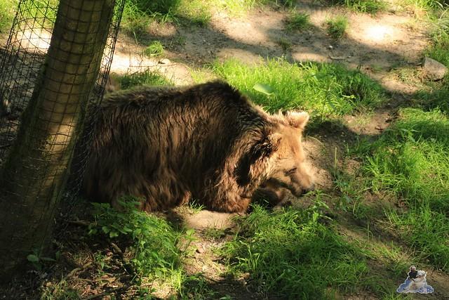Ouwehands Dierenpark Rhenen 01.07.2015  0154