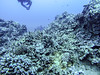 Diving Hawaii by Provinciana Itinerante