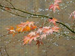 Last Blush of Autumn