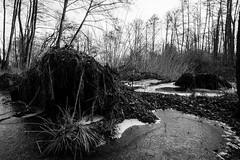 Canal d'Ille-et-Rance-042