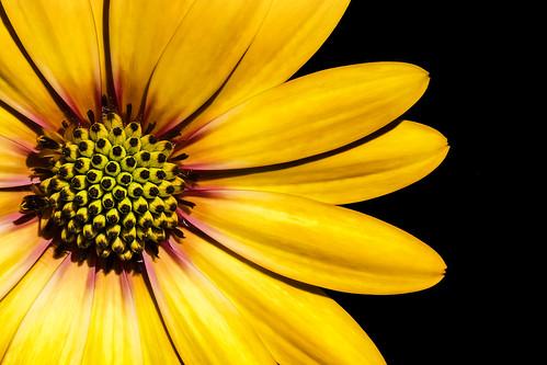 Yellow-III.jpg