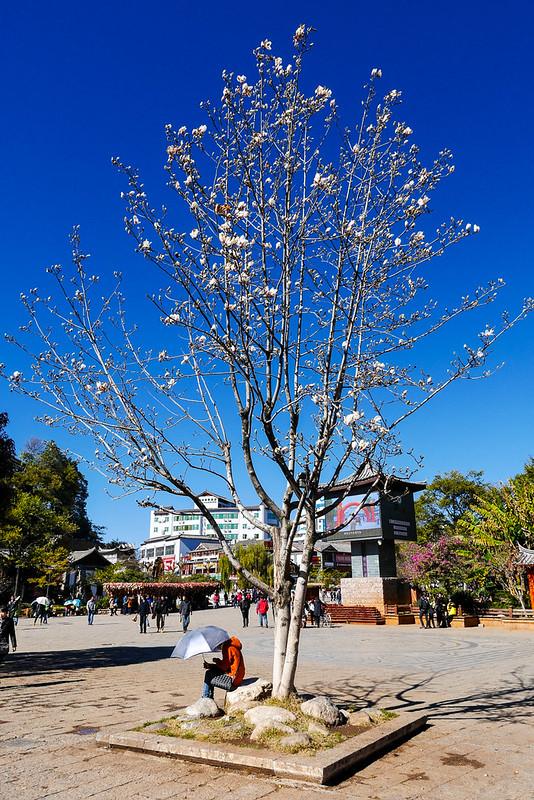 kunming_day7_40
