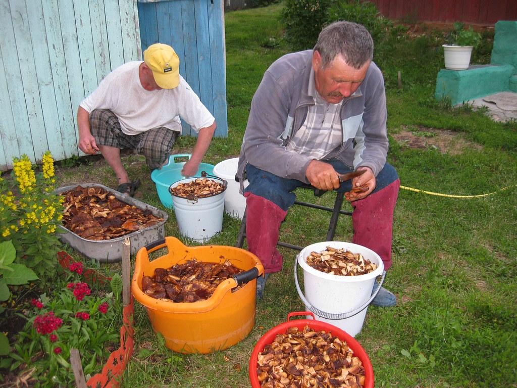Обработка грибов