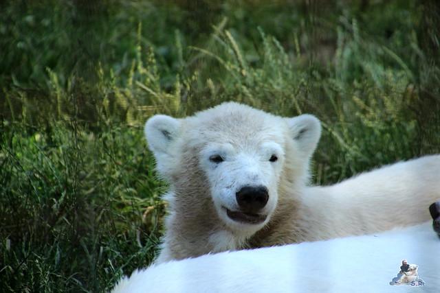 ouwehands dierenpark 30.06.2015  113